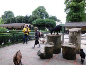 11-zoo-hagenbeck-2011
