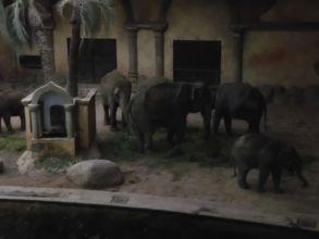 19-zoo-hagenbeck-2011