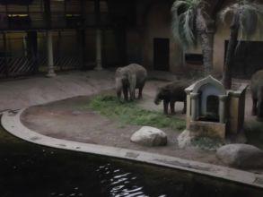 20-zoo-hagenbeck-2011
